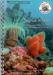 Tegnùe in tasca: gli organismi marini più comuni, oltre 200 specie animali e vegetali